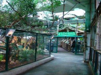 park-skulptur-i-tropikarium-326x245